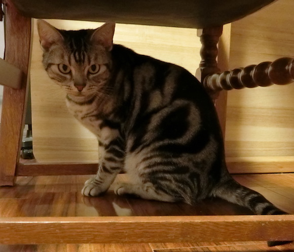 いつもながら甘えん坊です。 猫だけ留守番の時は、とても悲しそうな表情をします。 出かけるのがとてもつらいです。