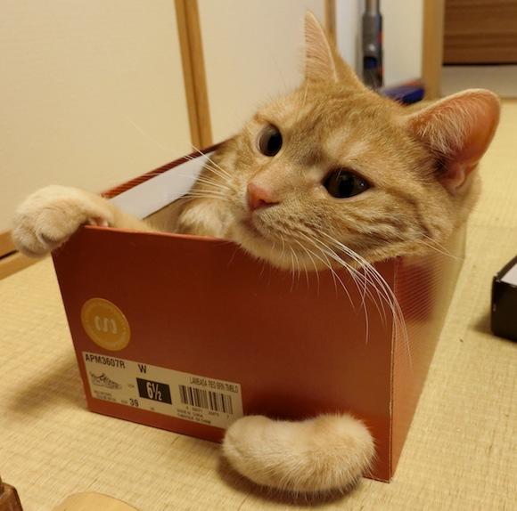 箱のチャロ