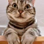 実は猫が膀胱炎でした。