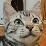 猫グッズ② 我が家のキャリーバッグ紹介