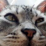 猫の脱走防止策(柵)