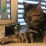 猫用カメラ